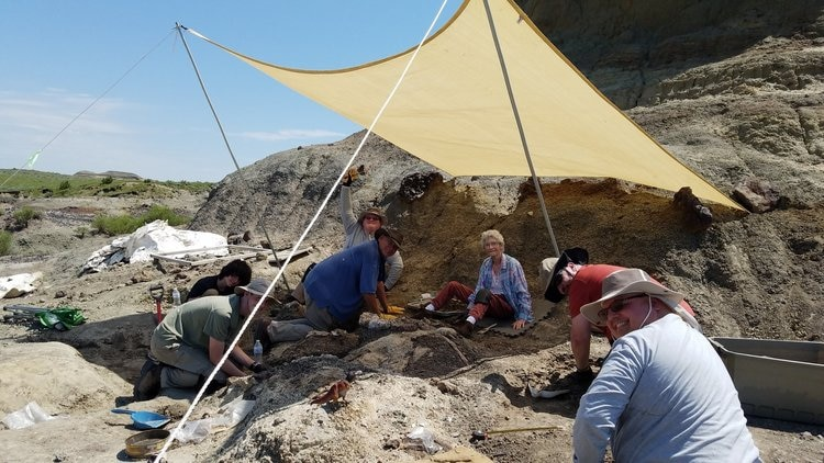 Paleontólogos trabajan en la formación de Hell Creek (Foto: Hell Creek Fossils)
