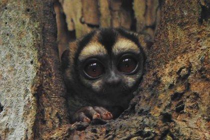 En Kofán hay un sendero especializado para poder ver a los monos nativos del lugar. Foto: Cortesía del CentroEcoturístico Kofán.