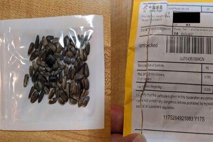 Aunque USDA está analizando muestras de semillas, estimó que se trata de una forma de scam llamada brushing. (Departamento de Agricultura de Ohio)