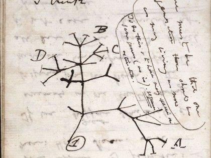 Roban dos manuscritos de Darwin en la Universidad de Cambridge