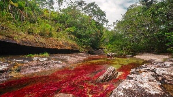 """Caño Cristales se encuentra considerado el """"Río más hermoso del mundo"""" por su variedad de colores naturales (Mario Carvajal (cc) 2012)"""