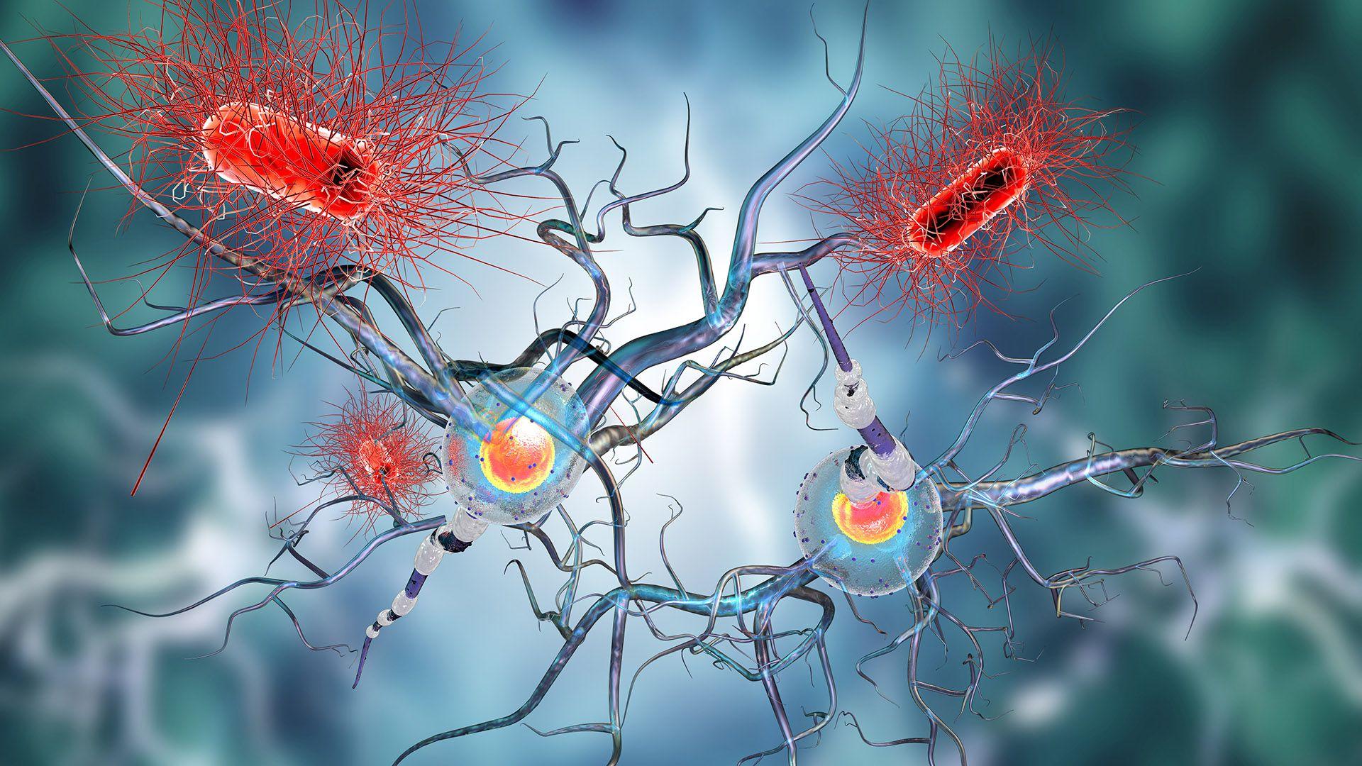 En las enfermedades autoinmunes, el organismo ataca a sus propias células sanas (iStock)