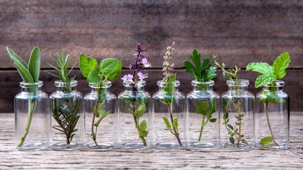 La homeopatía unicista administra un solo medicamento con el que procura exaltar la tendencia natural del organismo hacia su curación (Shuttersotck)