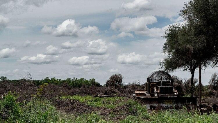 Los desmontes en Chaco