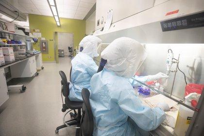 El embajador chileno aseguró que China es el país más avanzado en el desarrollo de una vacuna contra el coronavirus (David Stobbe/VIDO-InterVac/University of Saskatchewan/Handout via REUTERS)