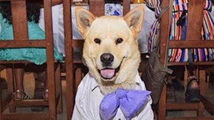 Oso fue el protagonista de la fiesta: llevó un traje y un moño