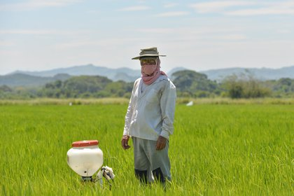 Se espera que este año los cultivos no excedan lo presupuestado por MinAgricultura en el Plan de Ordenamiento . Foto: Twitter Ministerio de Agricultura.