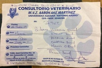 La dueña del can no contaba con el dinero para pagar las tres sesiones que faltaban de quimioterapia, por lo que su hermana publicó el caso en Facebook (Foto: Facebook Vanessa Euán)