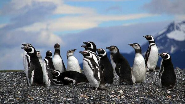 El investigador argentino vive en Puerto Madryn e inició su trabajo con pingüinos y conservación marina hace casi tres décadas