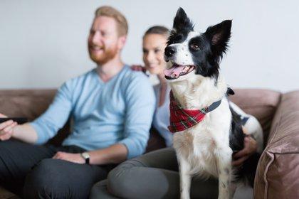 Cómo evitar cortocircuitos en nuestra comunicación con nuestros perros (Foto: Shutterstock)