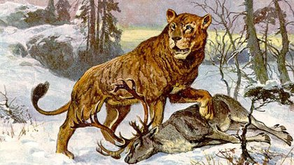 Hasta ahora se creía que el león americano habitó sólo el norte de América