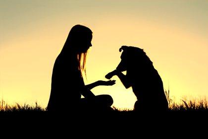 Los seres humanos han forjado vínculos más fuertes con las mascotas existentes y han adoptado nuevos animales a un ritmo rápido durante la pandemia (Shutterstock)