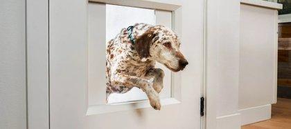 La puerta mQPet Portal identifica cuando la mascota se acerca por el dispositivo bluetooth del collar