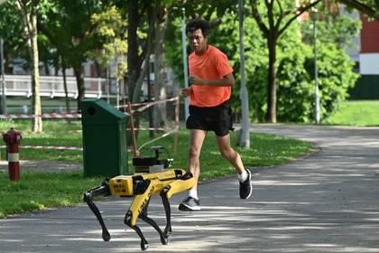 El robot Spot se está utilizando en Singapur en el marco de una prueba piloto (Photo by Roslan RAHMAN / AFP)