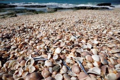 Los peces sin vida fueron arrastrados por millares y depositados en las costas (REUTERS/Amir Cohen)