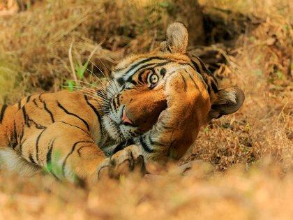 Jagdeep Rajput/ Comedy Wildlife Photography Awards