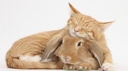 Dos animales, dos especies: solo los une la complicidad (WarrenPhotographic)