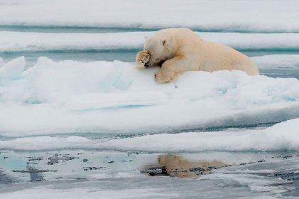 'Lamentation' - Jacques Poulard / Comedy Wildlife Photo Awards 2020