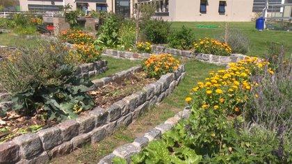 La producción urbana de alimentos consiste en cultivar distintos tipos de granos, hortalizas, hongos y frutas, como también plantas aromáticas, medicinales, ornamentales y árboles, en áreas urbanas o periurbanas