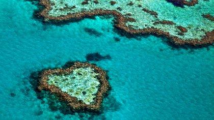 Un nuevo estudio pesimista sobre la Gran Barrera de Coral parece difícil de refutar: analizó datos de 91 años, el mayor volumen disponible hasta hoy. (Shutterstock)