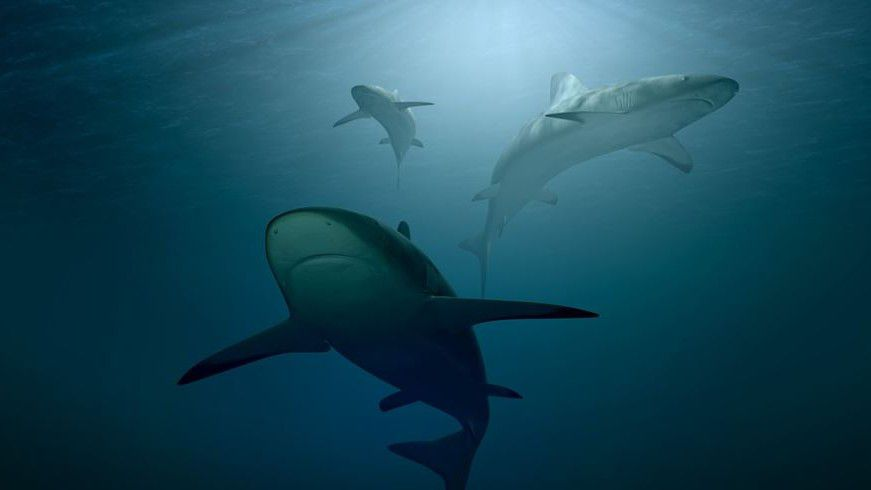 tiburones pixabay