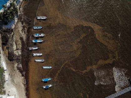 Una mancha café de sargazo cubre las costas de Playa del Carmen, uno de los destinos turísticos más importantes del país (Foto: Cuartoscuro)