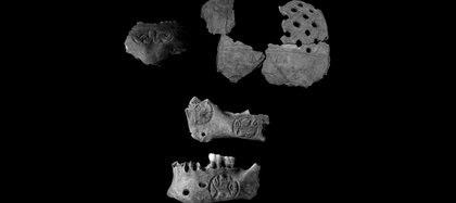 Partes del cráneo de un collar- trofeo encontrados en Pakal Na, los arqueólogos consideran que perteneció a un guerrero Foto: Patricia A. McAnany CC BY-ND