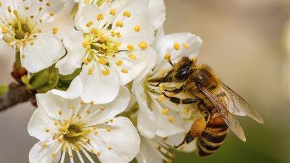 El calentamiento modificará los cultivos y las especies (iStock)