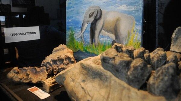 Muestra del stegomastodon