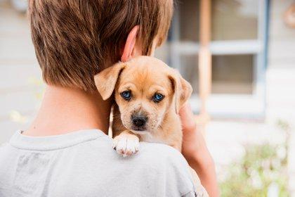 Para hacer el primer paseo, los expertos recomiendan luego de la tercer vacuna aplicada (Shutterstock)