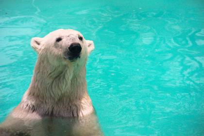 La coalición internacional Yupik asegura que el fallecimiento de la osa polar les agarró por sorpresa, pues su salud era óptima para ser trasladada al Reino Unido