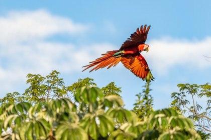 Una vez asegurado el territorio, es importante monitorear el estado de las poblaciones de las especies clave y hacer un adecuado manejo de las especies exóticas (Matias Rebak)