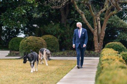 No se ha dado a conocer si ambos perros podrán regresar a la Casa Blanca en un futuro o si se quedarán de forma permanente en Delaware Foto: (Adam Schultz Official White House)