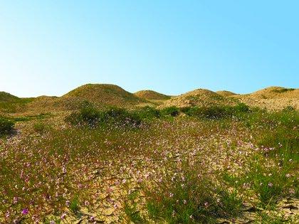 Hay alrededor de 11,774 túmulos funerarios en la región de Bahréin (UNESCO)
