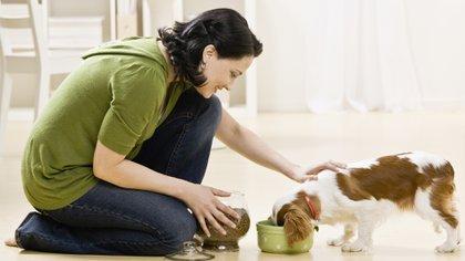 Esfundamental no tratar de humanizar al perro o gato (Getty Images)