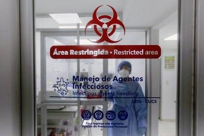 Un técnico de laboratorio que trabaja en un procedimiento de prueba COVID-19, en Guadalajara (Foto: Reuters)