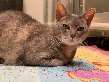Los gatos pueden contagiarse el COVID-19 fácilmente, según un nuevo estudio científico - REUTERS