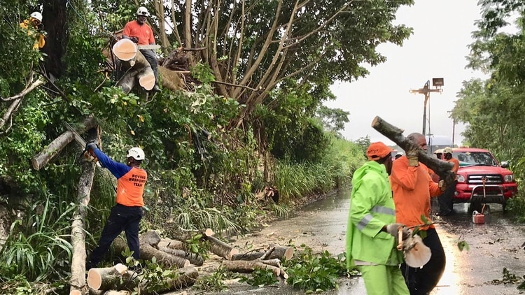 Volunteer members of the Roving Response Team remove a tree blocking a road after Tropical Storm Dorian passed overnight in Brighton St. George, Barbados August 27, 2019. REUTERS