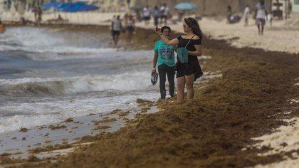 SOLIDARIDAD, QUINTANA ROO, 14JULIO2019.- Una mancha café de sargazo cubre las costas de Playa del Carmen, uno de los destinos turísticos más importantes del país, a pesar de los esfuerzos por recoger el alga. Algunos turistas intentan disfrutar de la playa a pesar del arribo masivo de sargazo, sin embargo, hoteleros se quejan de la baja en el aforo, que en estas vacaciones se esperaba hasta un 80 por ciento de ocupación hotelera, y ahora a penas llega al cincuenta.  FOTO: ISAAC ESQUIVEL /CUARTOSCURO.COM