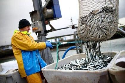 Un trabajador pesquero tira de una red de sardinas en el puerto de Newlyn, Gran Bretaña, el 29 de diciembre de 2020 (REUTERS/Tom Nicholson)