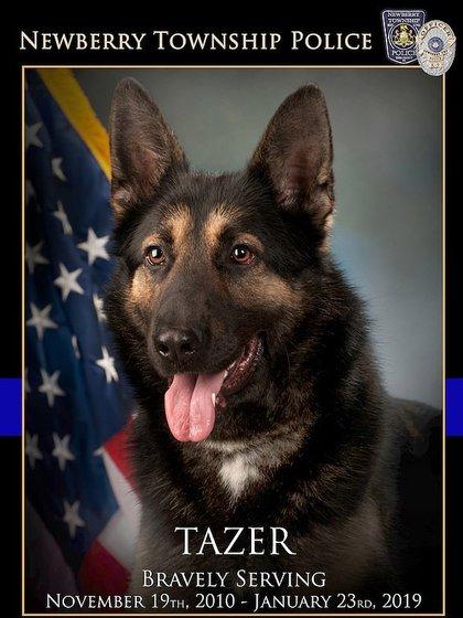 El veterinario se sorprendió de que Tazer hubiera seguido trabajando pese a su estado(Foto: Facebook Newberry Township Police)