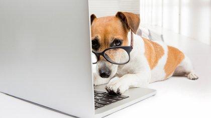 Cada vez más empresas de Estados Unidos como del Reino Unido permiten ingresar a sus empleados con sus mascotas (iStock)