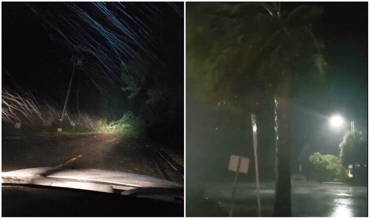 Durante toda la madrugada del martes, se denunciaron múltiples caídas de árboles al este del estado (Foto: Twitter)