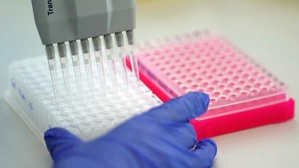 La vigilancia activa de estas variantes fue realizada por el Consorcio Argentino de Genómica de SARS-CoV-2, a través de los nodos de secuenciación del Laboratorio de Virología del Hospital de Niños Ricardo Gutiérrez (CABA), del Laboratorio UGB-INTA (Castelar) y el Laboratorio Central de la Ciudad de Córdoba EFE/EPA/RONALD WITTEK/Archivo