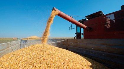 La Bolsa de Cereales de Buenos Aires proyecta una cosecha de maíz de 50 millones de toneladas
