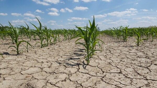 La sequía sería la más grave en 70 años.