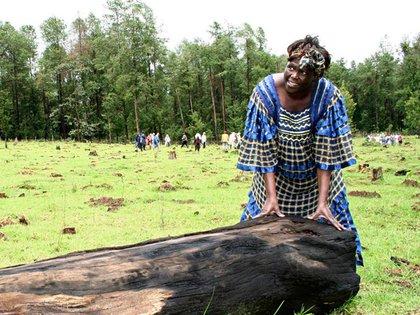 Wangeri Maathai Reuters
