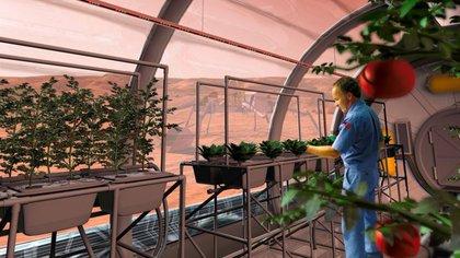 La papa podría abrir el camino a otros cultivos(NASA)