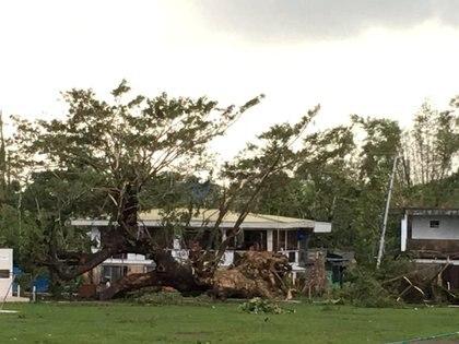 Los daños del tifón en un parque filipino (Paul Cinco/via REUTERS)