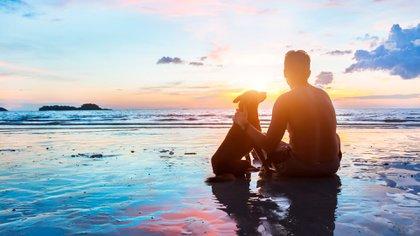 Los caninos pueden ver tremendamente bien por la noche (Shutterstock)